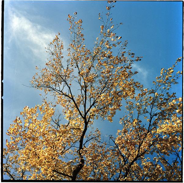 http://www.beninnes.com/files/gimgs/18_autumn2.jpg